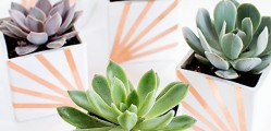 DIY-Copper-and-White-Succulent-Planters3