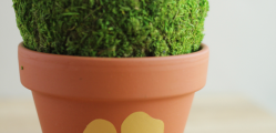 Shamrock-Flower-Pot
