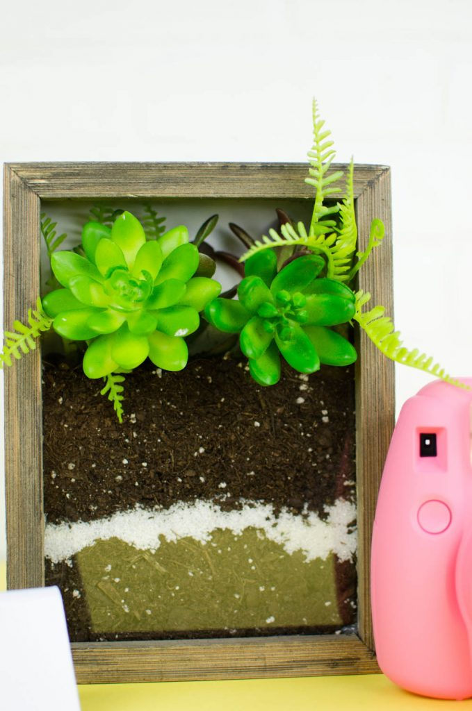 DIY Shadow Box Terrarium